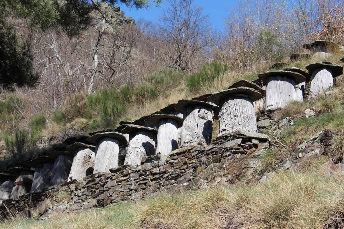chemin-sculpture-altier-rucher-tronc